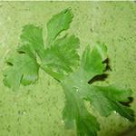 Майонез с петрушкой (зелёный)