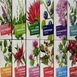 Полезные вкусности – травяные и цветочные чаи
