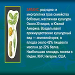 Арахис - растение семейства бобовых.