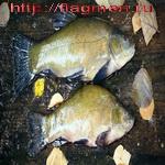 Болотный запах рыбы