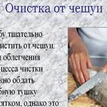 Чешуя с рыбы очистится