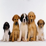 Купить собаку